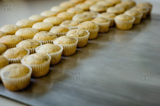 Freshly baked cup cakes arranged in row