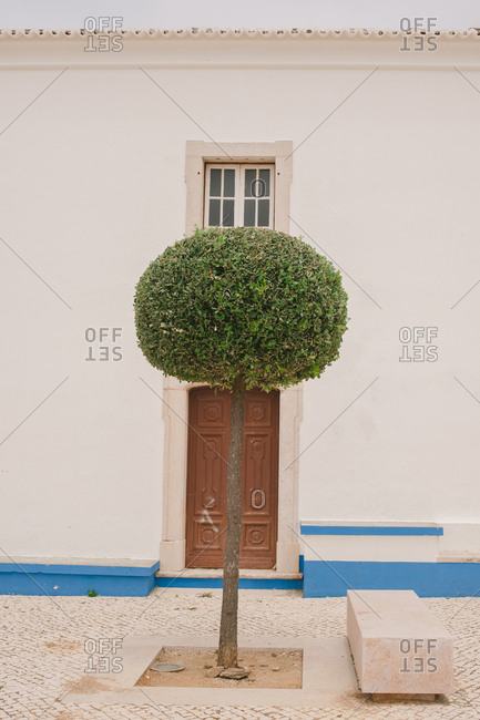 Tree in front of a building in Mafra, Portugal