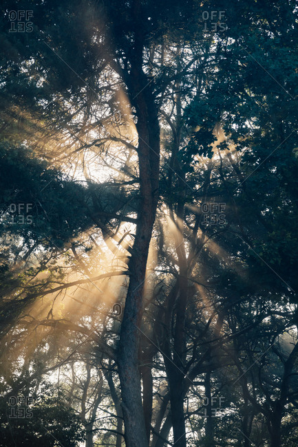 Backlit tree in the forest