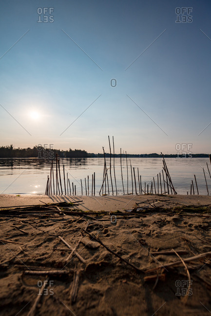Sticks of driftwood on a lakeshore
