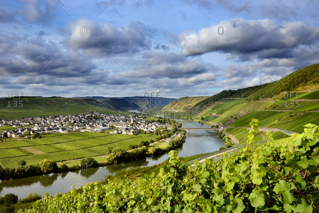 Germany, Deutschland, Rhineland-Palatinate, Rheinland-Pfalz, Trittenheim, Saxon Wine Route, S_chsische Weinstrasse, View over Trittenheim and surrounding vineyards along the german wine road (weinstrasse)
