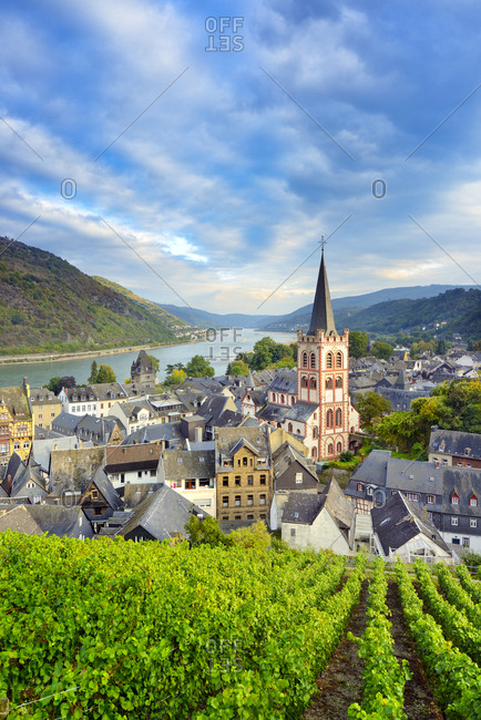 Germany, Deutschland, Rhineland-Palatinate, Rheinland-Pfalz, Bacharach, Saxon Wine Route, S_chsische Weinstrasse, View over Bacharach with surrounding vineyards. Bacharach is a village along the german wine road (weinstrasse) and Rhein river