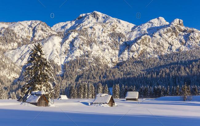 Italy, Veneto, Belluno district, Cadore, Sappada, Alps, Dolomites, Cima Sappada locality, landscape along cross country ski slope