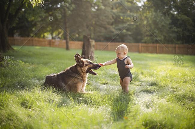 Baby girl touching German Shepherd while standing on grassy field at yard