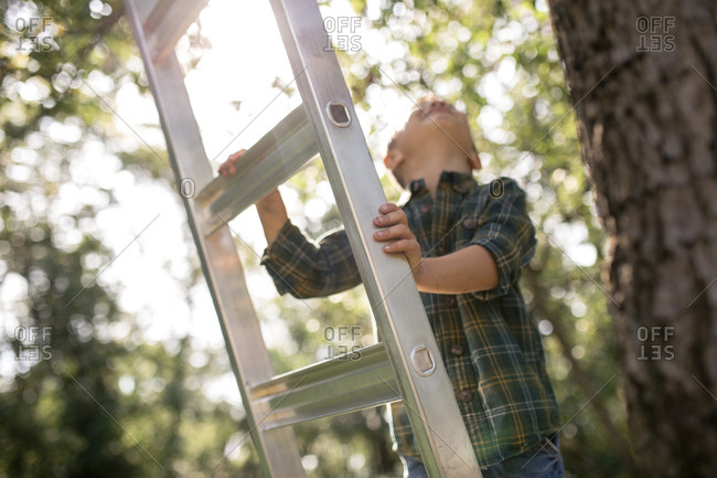 Boy looking up while standing on ladder at farm