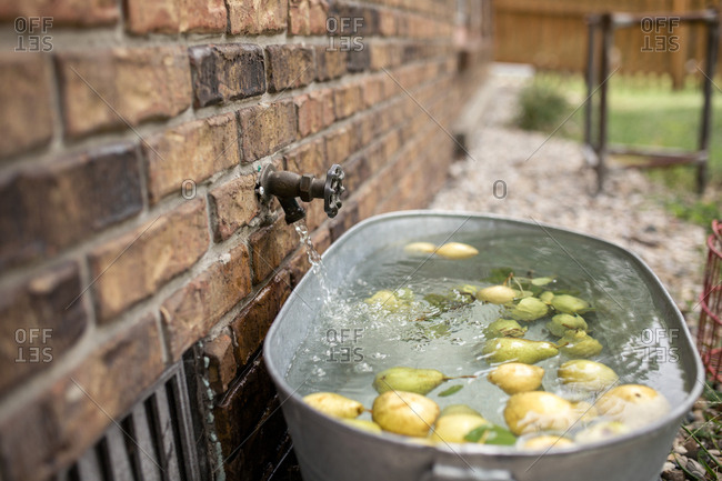Water running from tap in container with pears