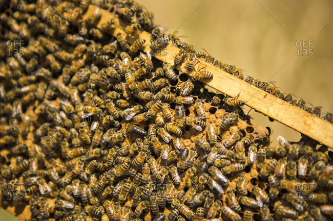 Close-up of honey bees on beehive in frame