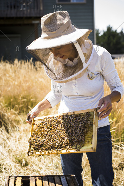 Female beekeeper examining honeycomb frame at field