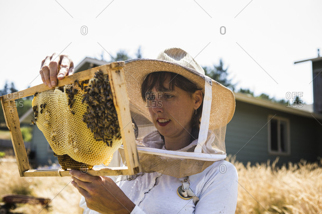 Female beekeeper examining honeycomb frame during sunny day