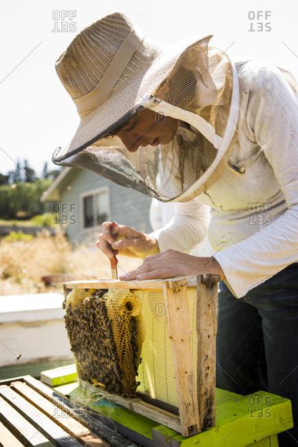 Female beekeeper working at field