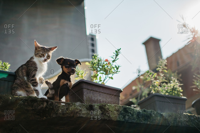Cat and dog together on rooftop