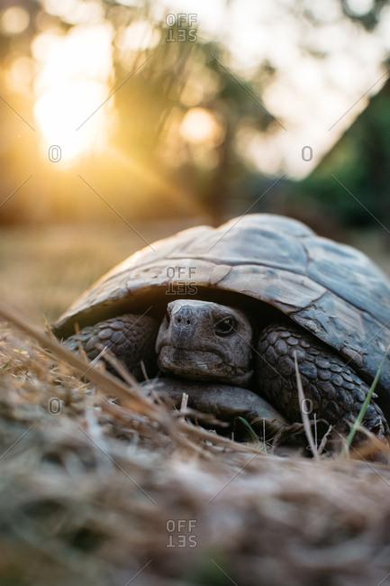 Turtle exploring nature