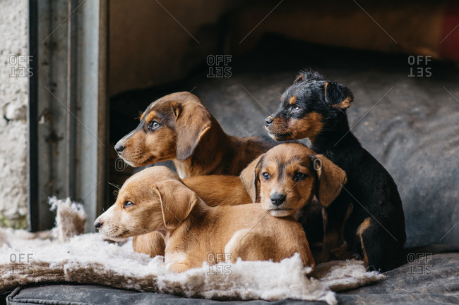 Group of dogs in a shelter