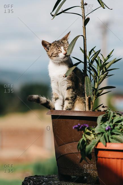 Cat smelling leaves in a flowerpot