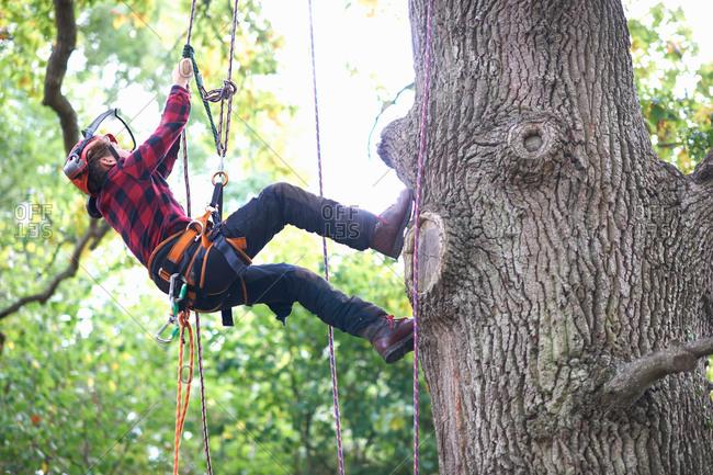 Trainee teenage male tree surgeon climbing up tree trunk