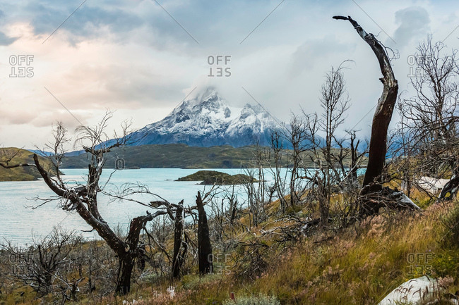 Bare trees in lake landscape and low cloud over mountain, Torres del Paine National Park, Chile