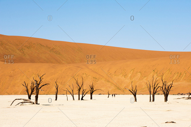 Dead Trees, Deadvlei, Sossusvlei, Namib Naukluft Park, Namib Desert, Namibia