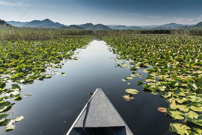 Boat on path through lilypads, Lake Scutari, Rijeka Crnojevica, Montenegro,
