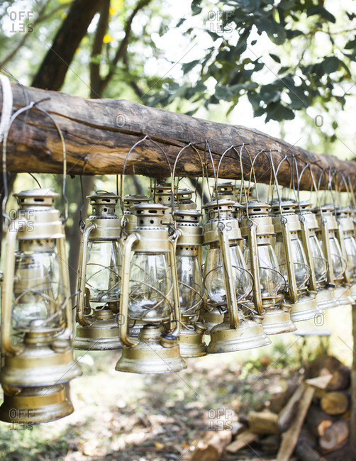 Oil lamps hanging on a tree at Sher Bagh during the day before they are lit up in the evening to light the camp