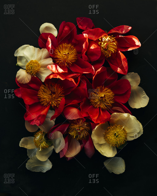 Overhead shot of red and yellow flowers in sunlight against black background