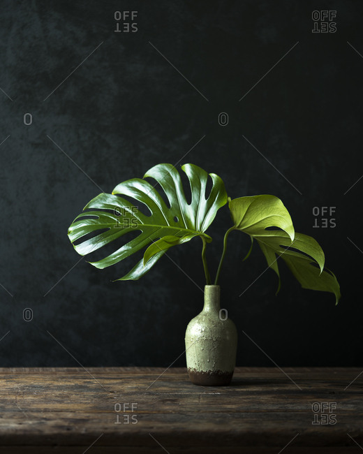 Still life of plant leaves in small vase