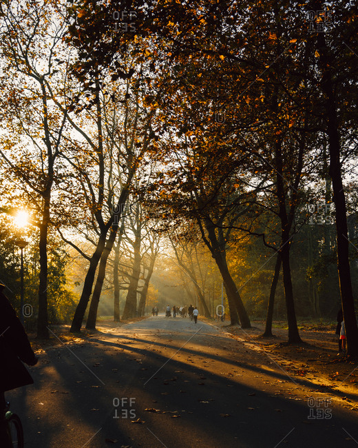 Amsterdam park in golden light in Autumn