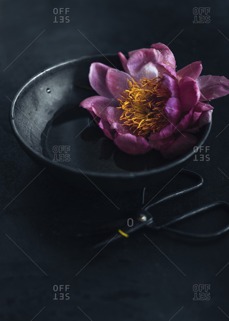Pink flower in bowl with water