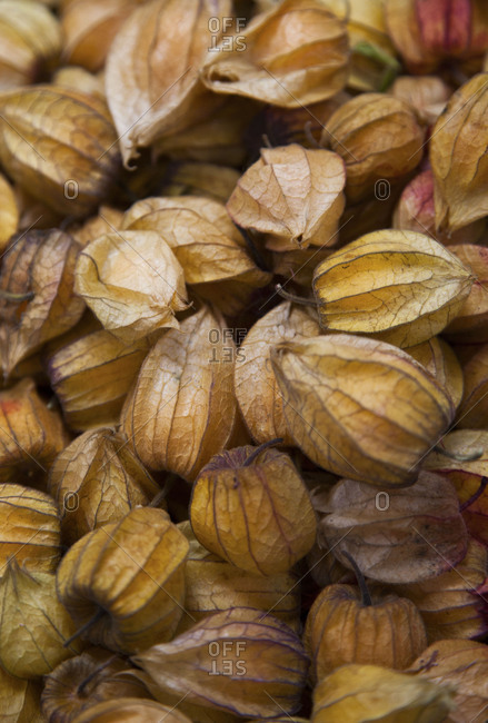 Physalis fruit husks