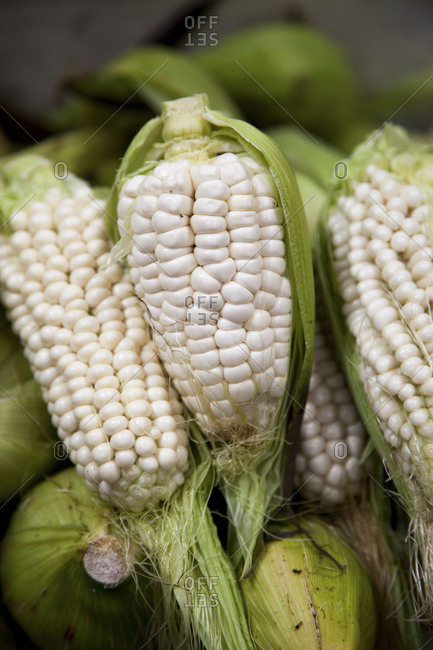White cobs of corn