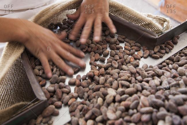 Hands guiding cocoa beans into a burlap sack in Quito, Ecuador