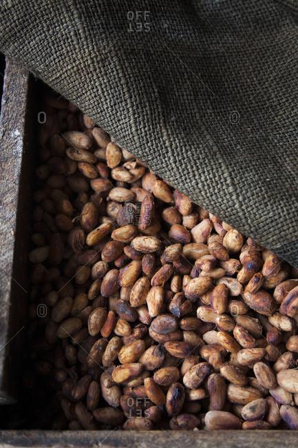 Raw cocoa beans in a wooden box, Quito, Ecuador