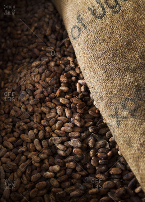 Raw cocoa beans drying, Quito, Ecuador