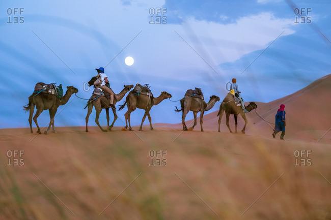 MOROCCO - AUGUST 15, 2017: Camelcade at desert