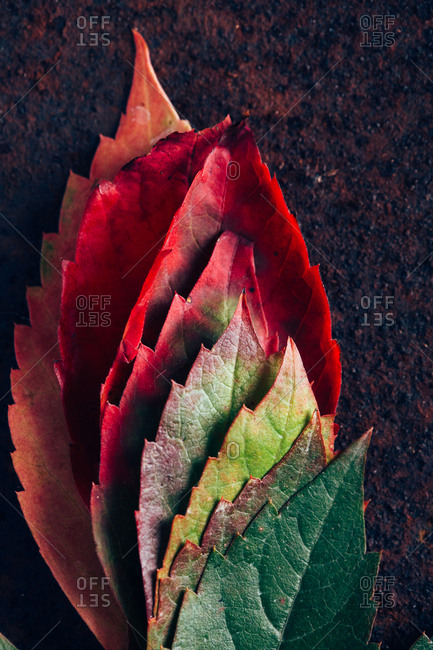 Leaves with gradient in fall
