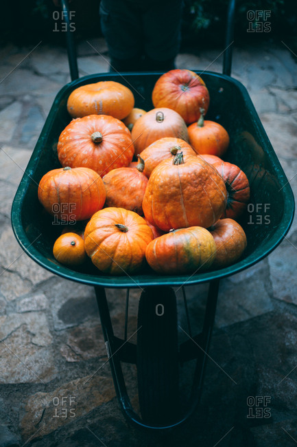 Pumpkin in wheelbarrow