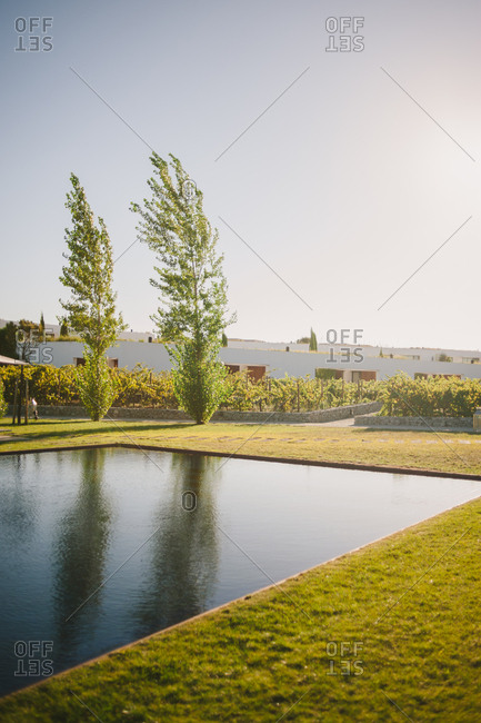 Outdoor pond and trees in landscaped yard