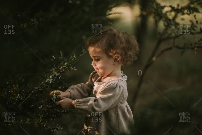 Little girl picking berries off a tree