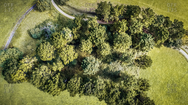 Aerial view of a small forest
