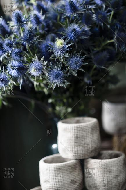 Sea holly arrangement in a flower shop