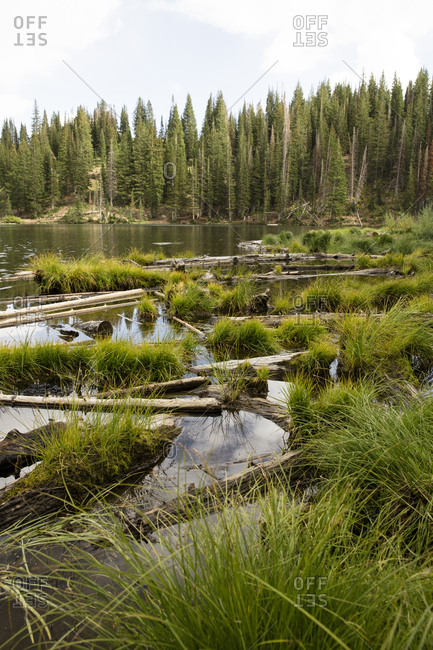 Logs and grasses in a mountain lake