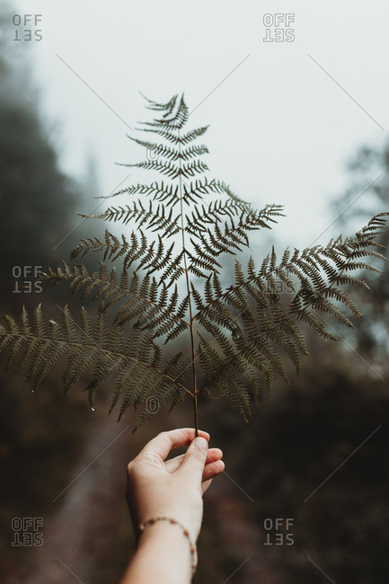 Crop hand holding and showing green leaf of fern on background of road in forest.