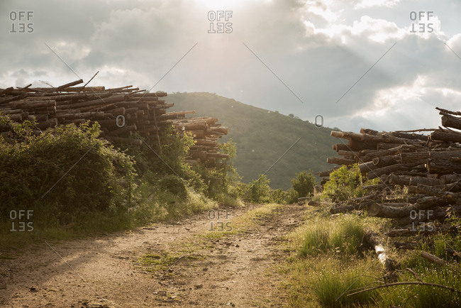 Piled logs by a forest road in sunny spring day