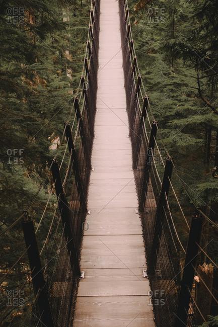 Hanging bridge between trees in coniferous woods.