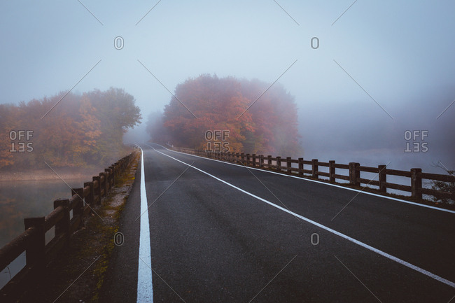 Roadway running among coniferous trees in foggy woods.