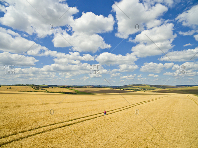 Aerial view of farmer walking in sunny golden barley field under blue sky with clouds