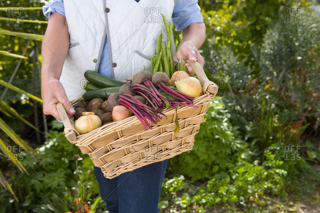 Woman with basket of vegetables, mid section