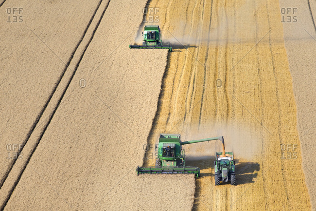Combine harvesters, harvesting wheat into trailer, in rural field