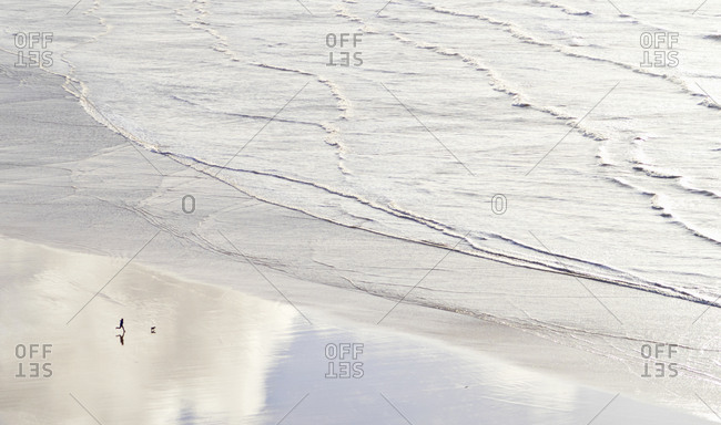 Aerial view person with dog running on wet beach along ocean waves