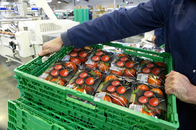 Worker lifting crate of packaged tomatoes in food processing plant