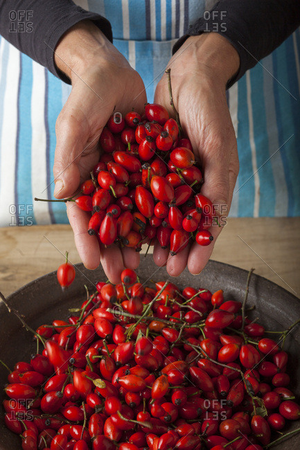 Woman holding out hand full of rose hip fruits